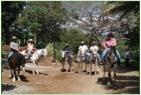 Equitation Naranjo Costa Rica