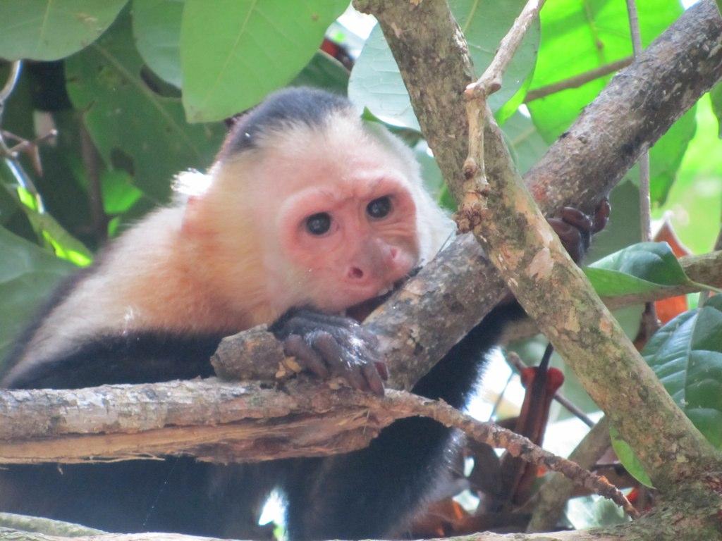 quoi faire au Costa Rica