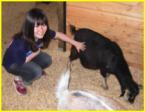 Camp animalier de 8 à 11 ans
